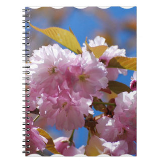 Blooming Cherry Blossoms Note Book