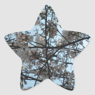 Blooming Cherry Blossoms Star Sticker