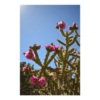 Blooming Cholla Cactus Flowers Art Photo