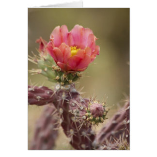 Blooming Cholla Cactus Greeting Card