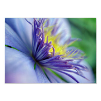 Blooming Clematis Framable Poster