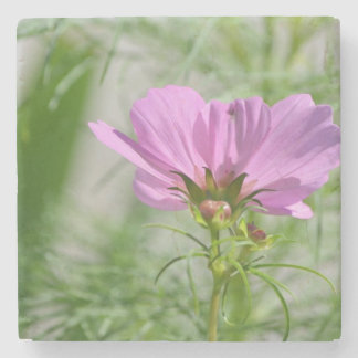 Blooming Cosmos Flowers Stone Coaster