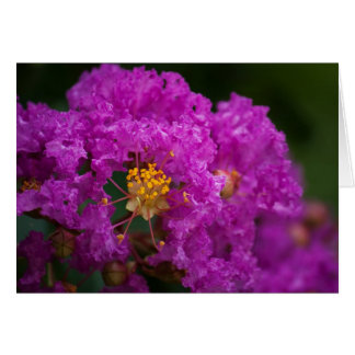 Blooming Crepe Myrtle photo notecard