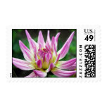 blooming dahlia2 stamp