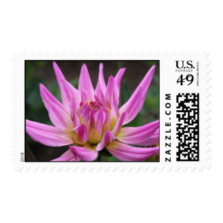 blooming dahlia stamps