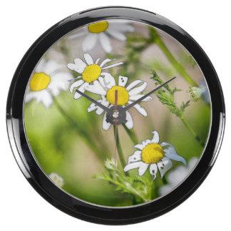 Blooming Daisies Floral Painterly Photograph Aquavista Clock