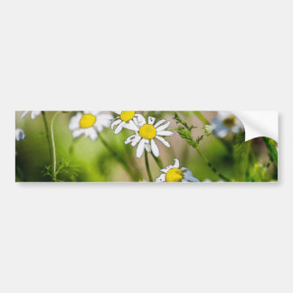 Blooming Daisies Floral Painterly Photograph Bumper Sticker