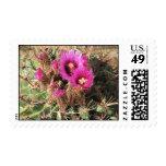 Blooming Devil's Tongue Barrel Cactus Postage
