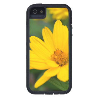 Blooming False Sunflowers iPhone 5 Cover