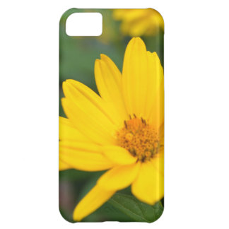 Blooming False Sunflowers Cover For iPhone 5C