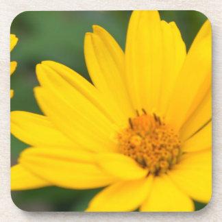 Blooming False Sunflowers Coasters