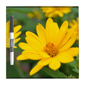Blooming False Sunflowers Dry Erase White Board