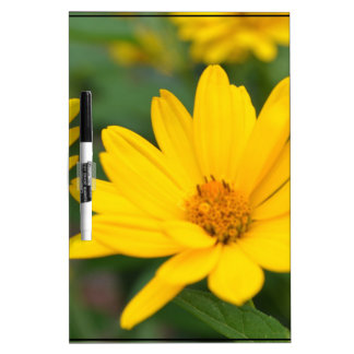 Blooming False Sunflowers Dry-Erase Board