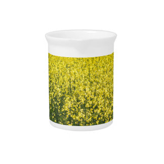 blooming field of rapeseed pitcher