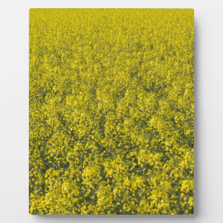 blooming field of rapeseed display plaques