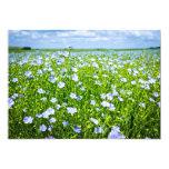 Blooming flax field card