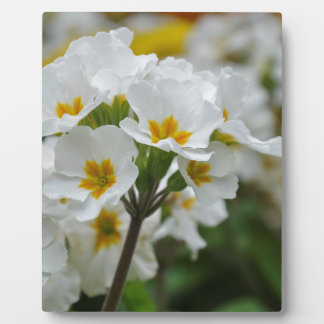 Blooming Flowers Photo Plaque