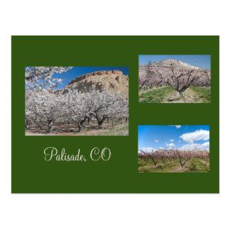 Blooming Fruit Trees near Palisade, Colorado Postcard