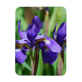 Blooming Iris Magnets