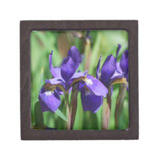 Blooming Iris Premium Jewelry Boxes