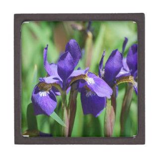Blooming Iris Premium Gift Box