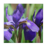 Blooming Iris Small Square Tile