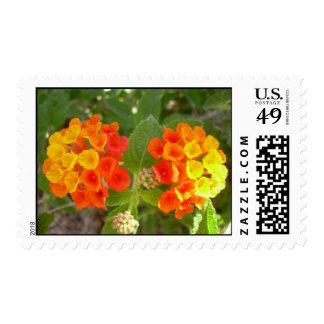 Blooming Lantana Postage