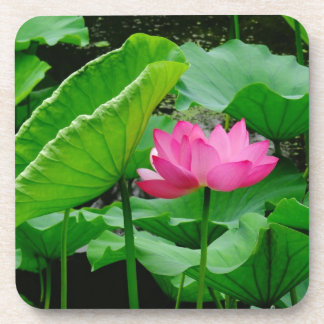 Blooming Lily Coaster