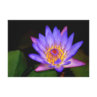 Blooming Lily Pad Canvas Print