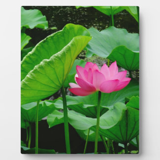 Blooming Lily Plaque