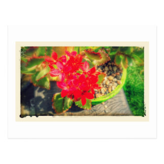 Blooming Little Red Flowers Grunge Postcard