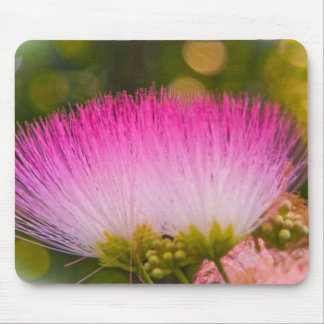 Blooming Mimosa Mouse Pad