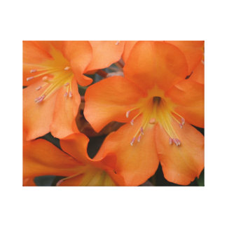 Blooming Orange Rhododendron Stretched Canvas Print