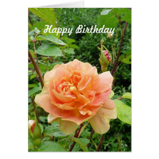 Blooming Peach Rose Flower Birthday Template Cards