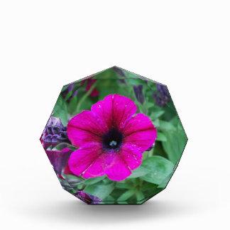 Blooming Petunia Acrylic Award
