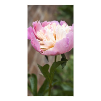 Blooming Picture Card