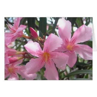 Blooming pink flowers card