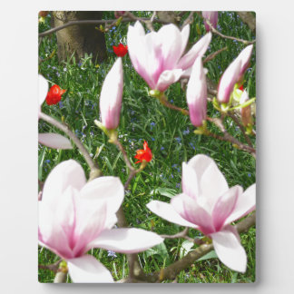 Blooming Pink Magnolia 01 Plaque
