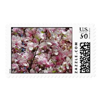 Blooming Pink Magnolia Field Spring Flower Postage
