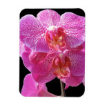 Blooming Pink Orchid Premium Magnet Flexible Magnet