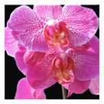 Blooming Pink Orchids Invitation