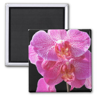 Blooming Pink Orchids Magnet Fridge Magnets