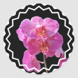 Blooming Pink Orchids Sticker