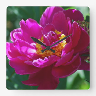 Blooming Pink Peony Square Wall Clocks
