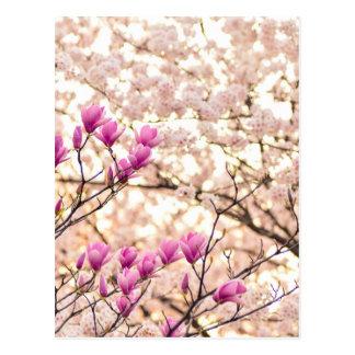 Blooming Pink Purple Magnolias Spring Flower Postcard