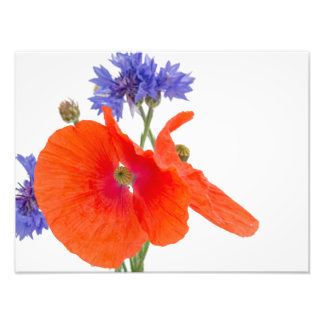 blooming poppies en hablas and blue cornflowers fotografía