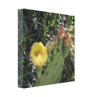 Blooming Prickly Pear Cactus Canvas Print