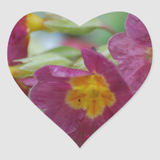 Blooming Primula Flowers Heart Sticker