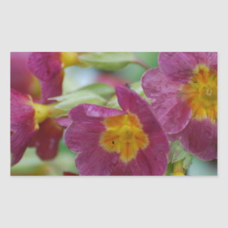 Blooming Primula Flowers Rectangular Sticker