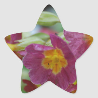 Blooming Primula Flowers Star Sticker